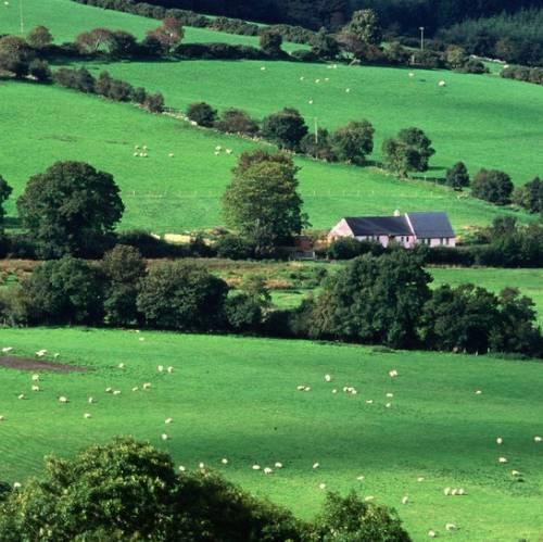 Campo cercano a Cork