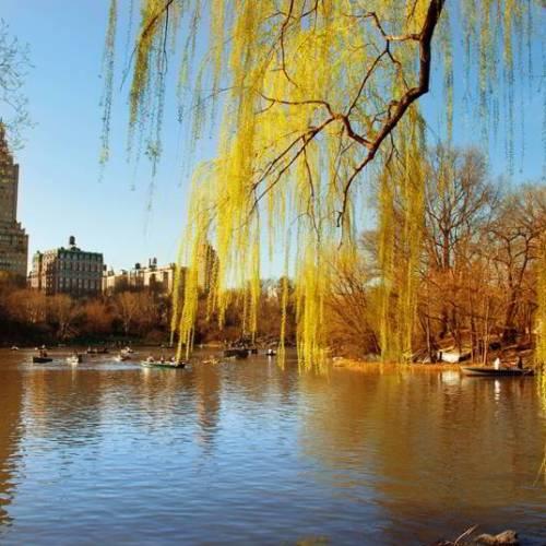 Parque Central Park en Nueva York