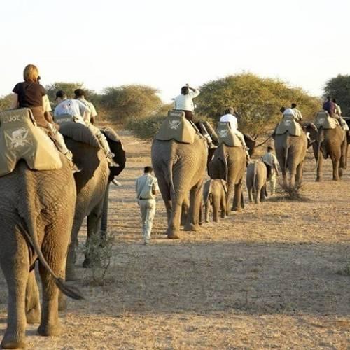 Safari en Ciudad del Cabo